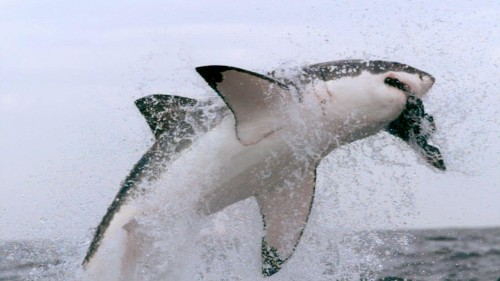 A fake Shark Week documentary about megalodons caused controversy. Why is Discovery bringing it up again?