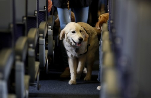 Emotional support animals are not service animals