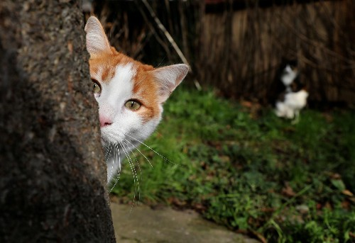 After three years and hundreds of gruesome deaths, Britain's 'Cat Killer' case has been solved