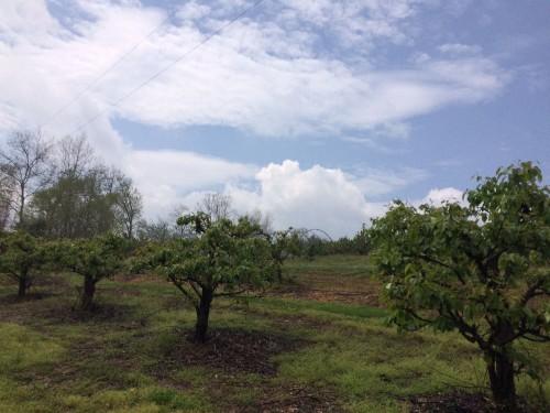 The key to a family farming renaissance? Niche crops.