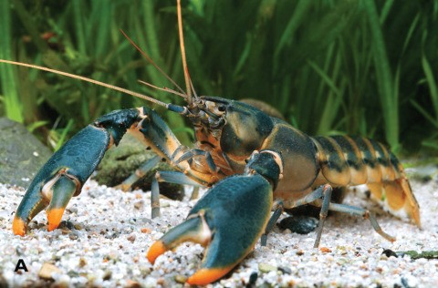 Theree's a new crayfish species and it's named after Edw…