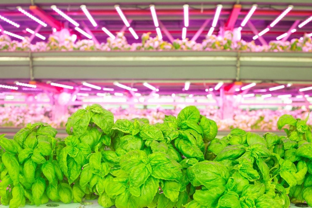 Will indoor, vertical farming help us feed the planet — or hurt it?