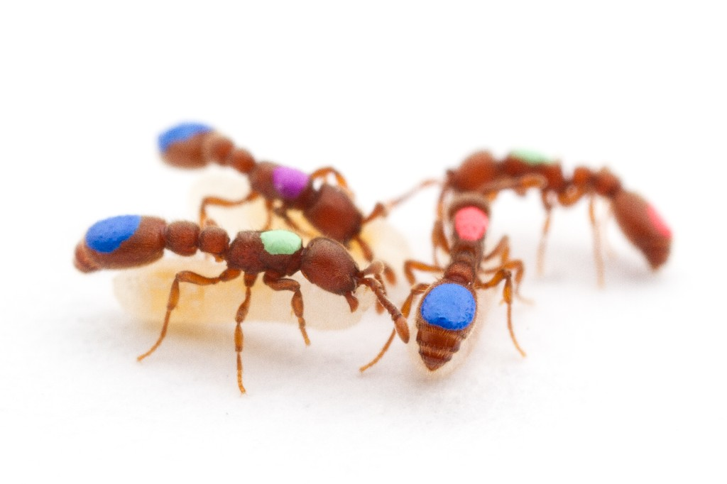Bug Life - Magazine cover