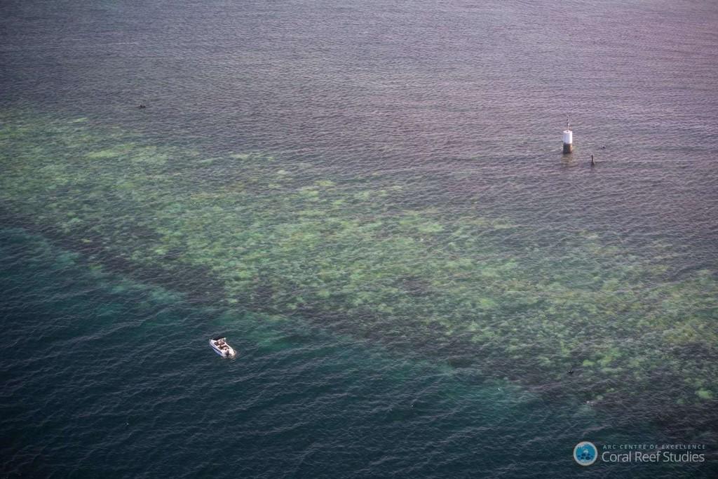'Severe' coral bleaching is damaging huge swaths of the Great Barrier Reef, scientists say