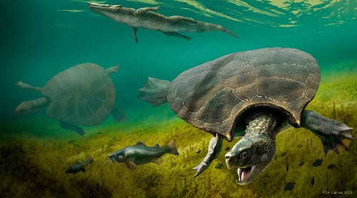 Fossils of car-size ancient turtles found in South America