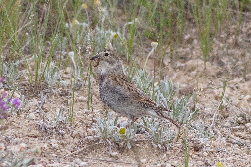 A small bird sheds its Confederate past with a new name