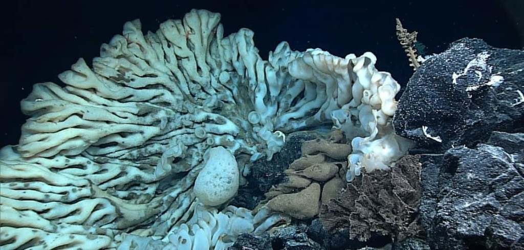 A sea sponge the size of a minivan could be one of the world's oldest living animals