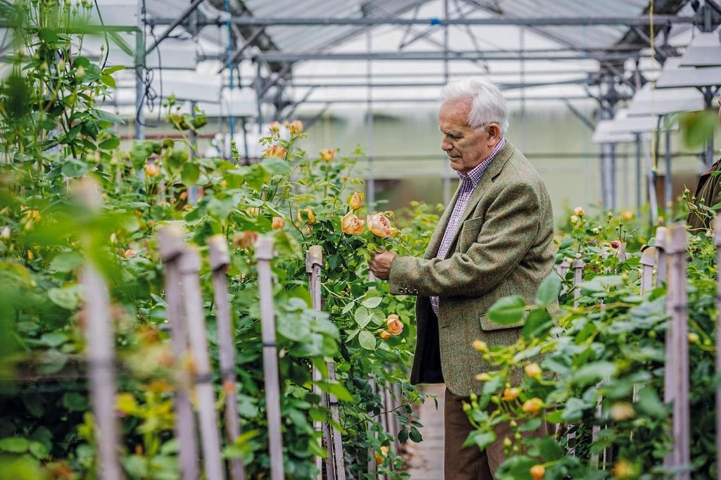 David Austin, plant breeder who restored fragrance and romance to the rose, dies at 92