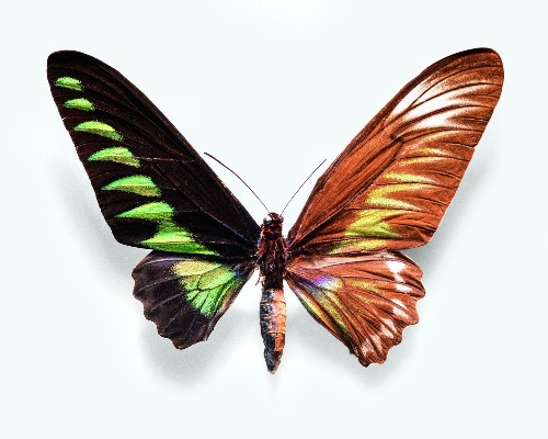 A rare half-male, half-female butterfly — and other photos of evolutionary wonders