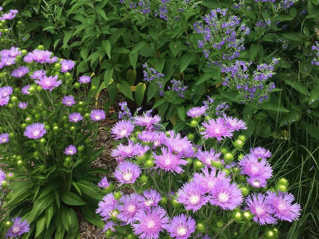 It's time to plan the new season's garden, and it pays to be picky