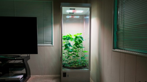 7Sensors Grow Box will automatically care for your plants, from produce to pot