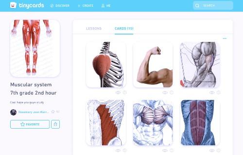 Duolingo brings Tinycards to the web