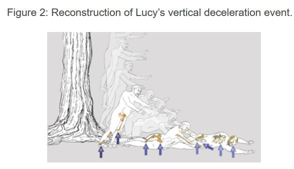 3D-print your own bones from everyone's favorite fossil, Lucy