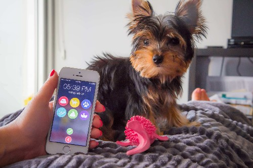 DogSync Is An App To Help Your Family Keep Track Of Feeding Fido