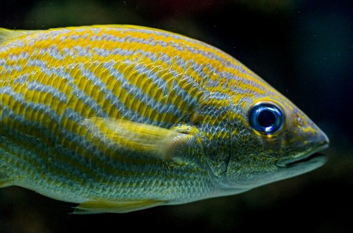 Google Accused Of Denying AdSense Payouts In Fishy Class Action Lawsuit