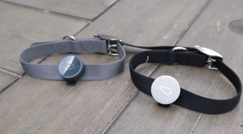 Whistle, The 'FitBit For Dogs', Adds GPS Features To Make Sure You Never Lose Your Pet