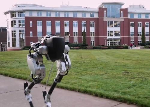 Cassie the ostrich bot does the bipedal robot chicken walk
