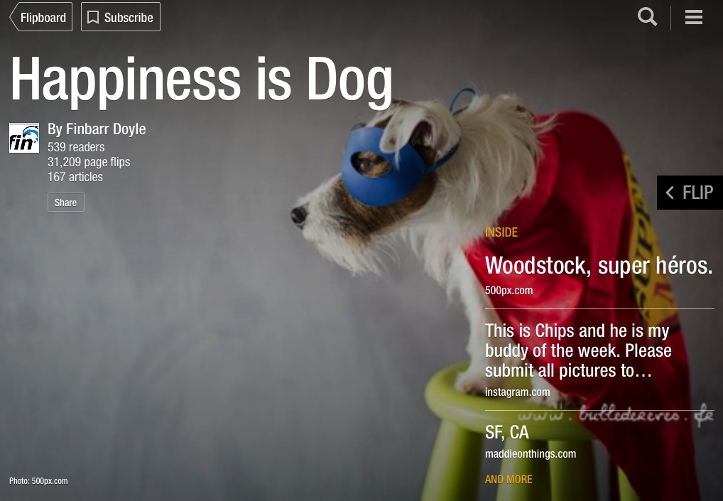 happinessisdog