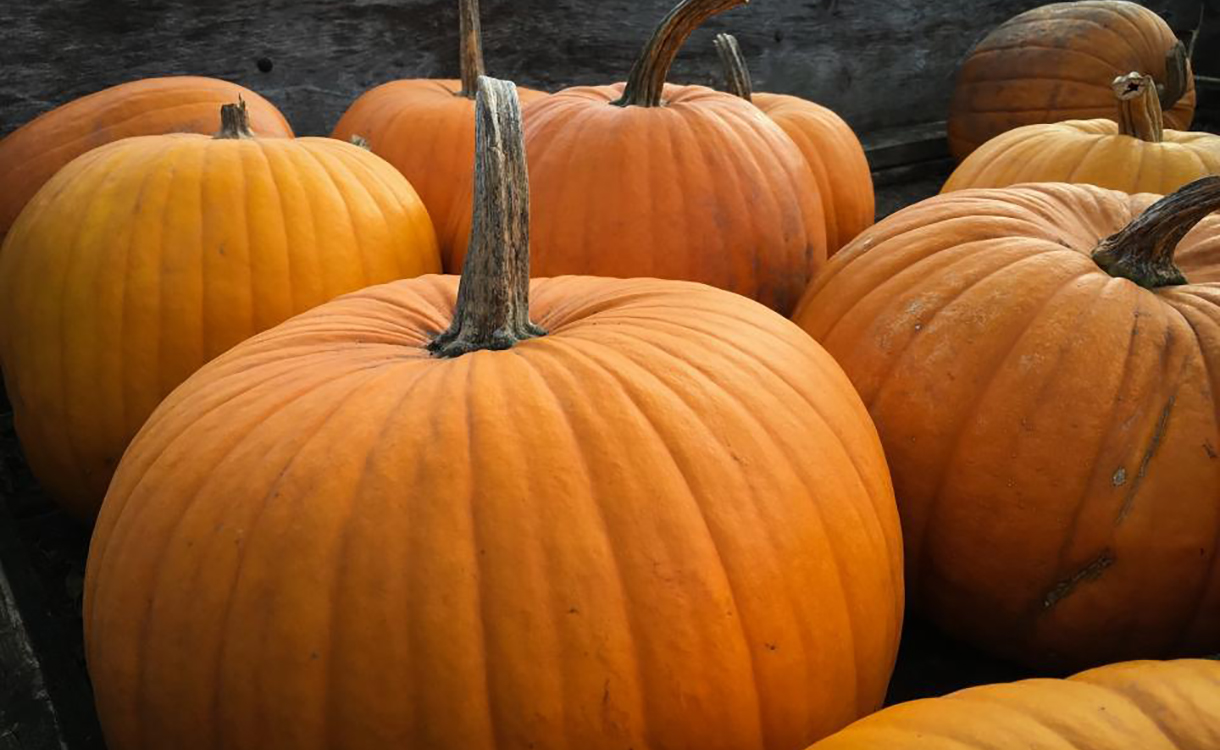 header_pumpkin