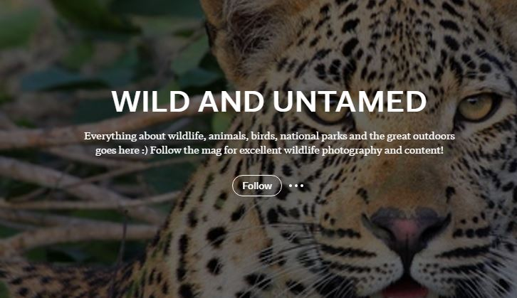 WanderwithJo-Wild-and-Untamed Flipboard Magazine